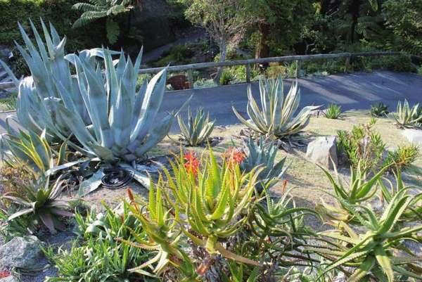 wellington-botanische tuin-nieuw-zeeland