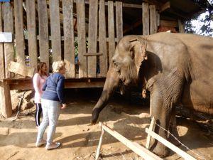 olifant langnekken Karen