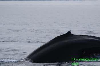 ijsland walvis spotten Husavik foto Eddy Tassenoy