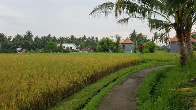 wandelreis-indonesie
