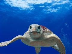 zeeschilpad