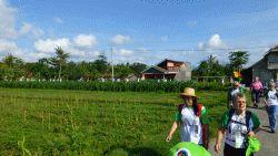 langs rijstvelden