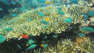 menjangan snorkeling pemuteran