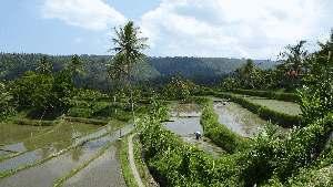 rijstterrasvelden
